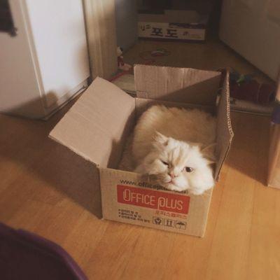Cat Love Box Heema