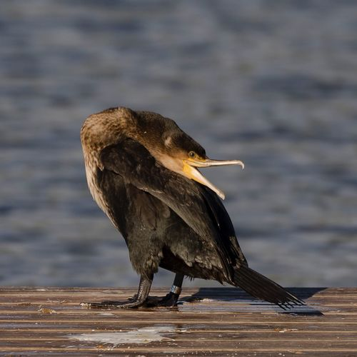 Morning rituale Birds Of EyeEm  Bird Photography EyeEm Birds Sony Sonya77ii Sony A77ii