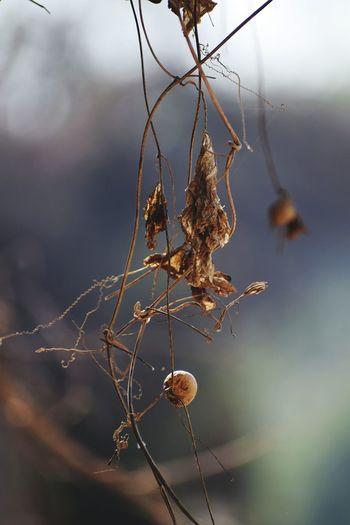 Hanging Branch