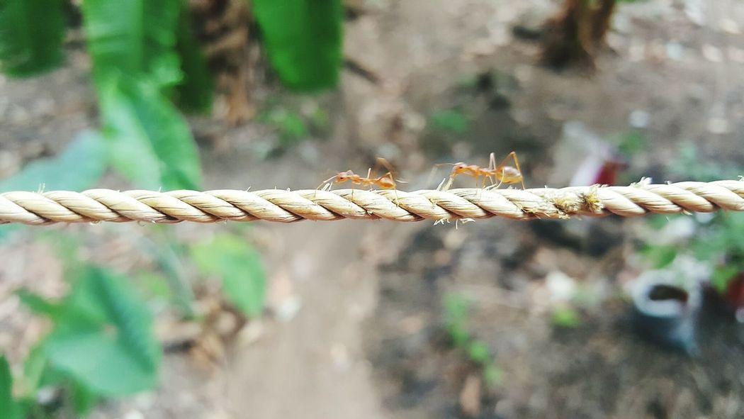 Circle of life #ants Summer Ants Close Up Ants At Work Macro Macro Photography Macro_collection Life Strength