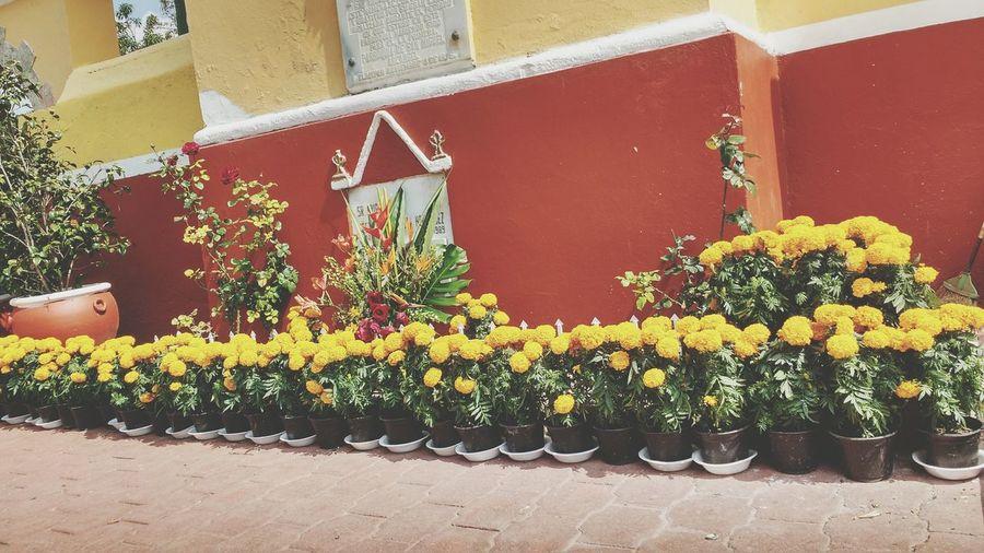 Mexico City Flowers Cempasúchil Taking Photos Fresh City Escape Town San Miguel Tlaixpan