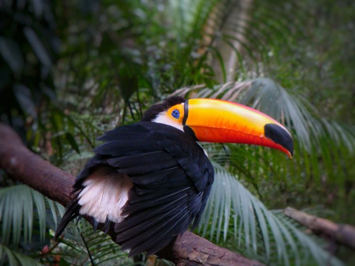 Tucan Bird Park
