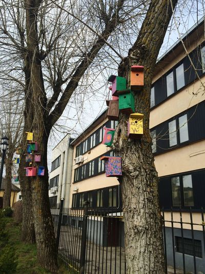 Déjà Vu Nesting Boxes Lithuanian Trees Trees Decor Day Outdoors Look Around  Beauty Is Everywhere  Enjoylifecolors