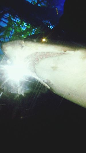 Check This Out Shark Scary so close Dubaiaquariumandunderwaterzoo