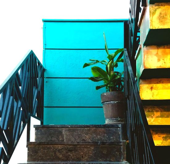 Turquoise and