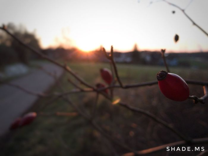 Focus On Foreground Close-up Food And Drink Fruit Outdoors Sunset Nature