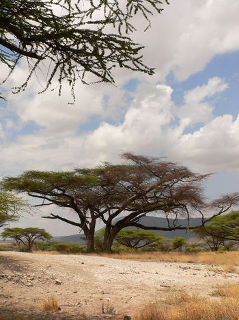Shaba National Reserve in Northern Kenya Kenya National Park The Week On EyeEm Africa Bare Tree Beauty In Nature Cloud - Sky Day Grass Landscape Mountain Nature No People Outdoors Safari Scenics Sky Tranquil Scene Tranquility Travel Destinations Tree Water