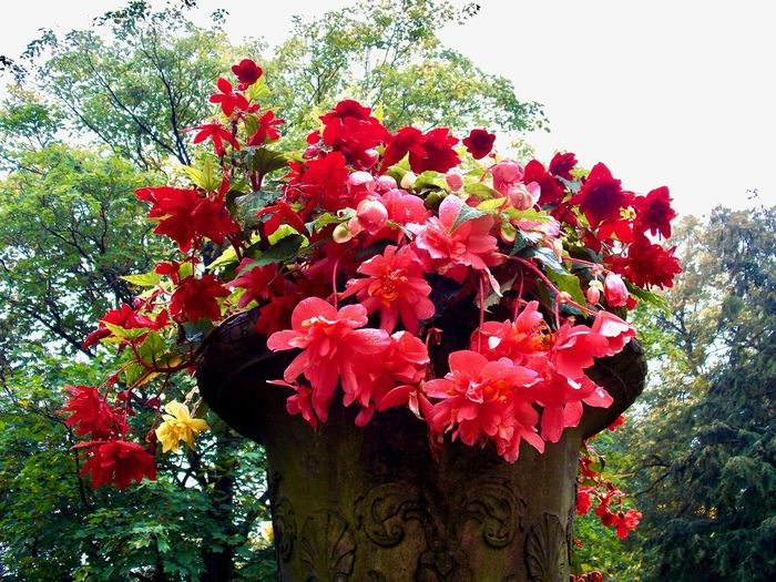 Best travel moments ... Beauty In Nature Blooming Branch Close-up Day Flower Flower Head Fragility Freshness Growth Low Angle View Nature No People Outdoors Petal Plant Red Red Color Red Flower Stone Vessel Tree