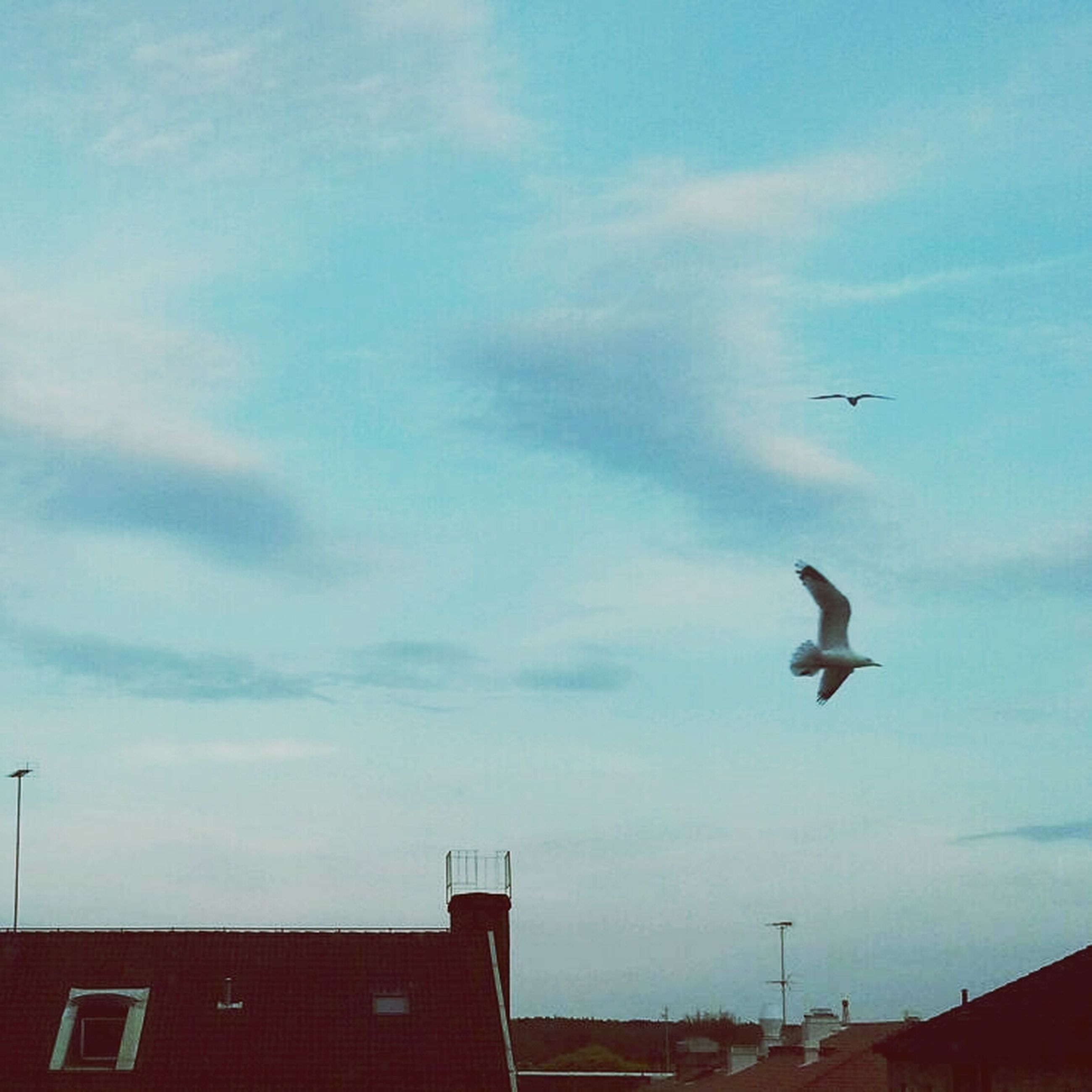 bird, building exterior, flying, low angle view, sky, animal themes, built structure, architecture, animals in the wild, wildlife, cloud - sky, roof, cloud, outdoors, seagull, one animal, cloudy, mid-air, blue, no people