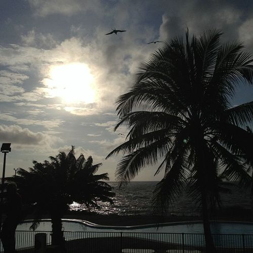 Early morning birds by the pool on Christmasisland