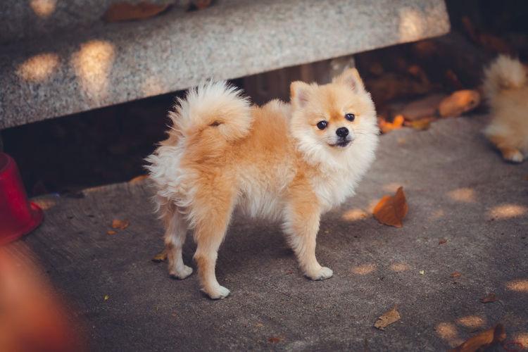 High angle portrait of cute dog