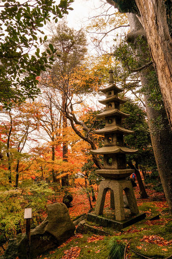 Autumn Autumn Leaves Ishikawa, Japan Japan Japanese Garden Japanese Lantern Lantern Beautiful Scene Garden Japan Lantern Kanazawa Kenrokuen Kenrokuen Garden No People Outdoors Tree