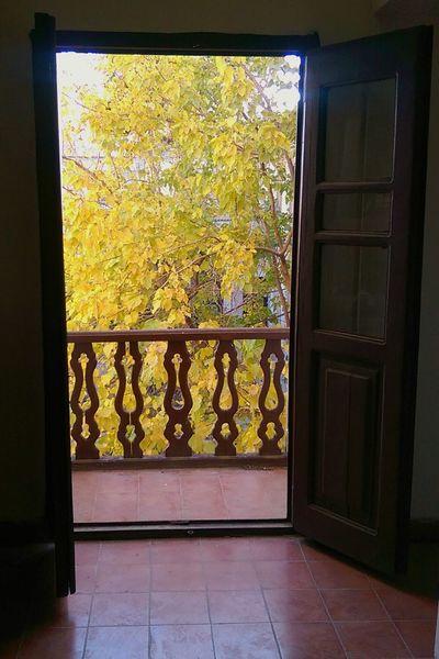 Indoors  Window No People Day تکیه بیگلر بیگی Kermanshah کرمانشاه ظهر نور Iran Past Beautyness Sunlight Beauty à La Recherche Du Temps Perdu Floor Yellow Leaves Tree