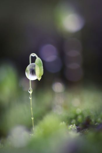 Dewdrop on moss