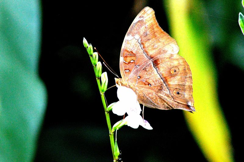 Butterfly on