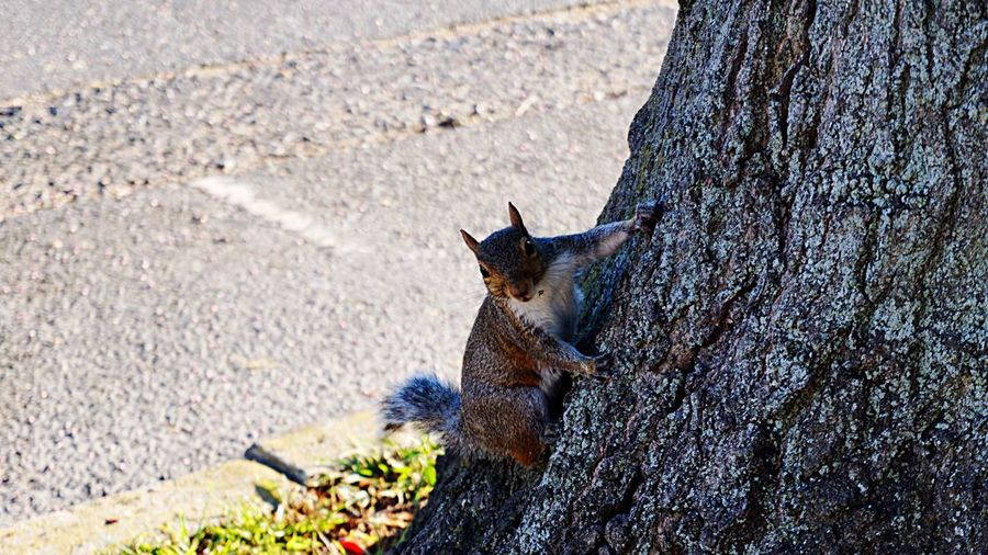 Pixxzo too close for comfort Too Close For Comfort Animals Squirrel posing for the pic like snap already 😂 Lakewood Nj EyeEm New Jersey New Jersey
