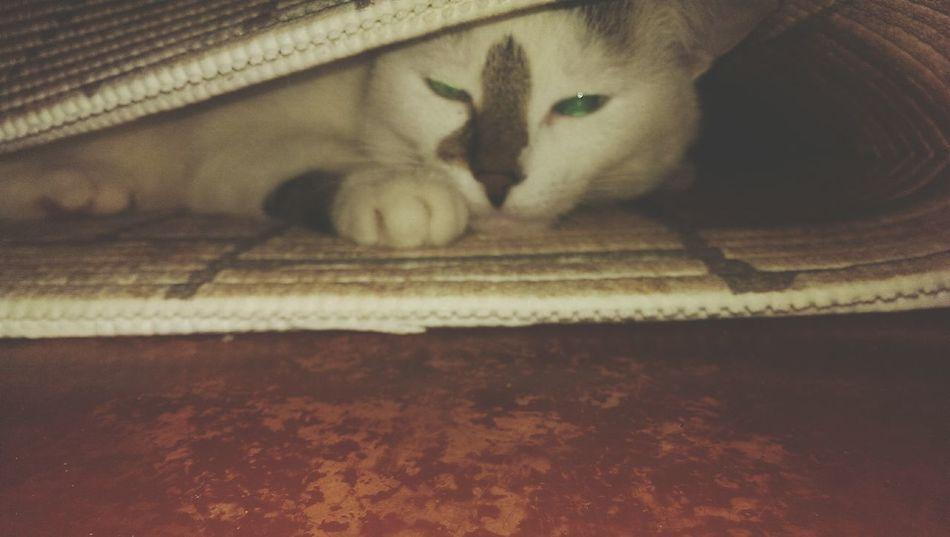 Cat♡ Днепропетровск EyeEmNewHere