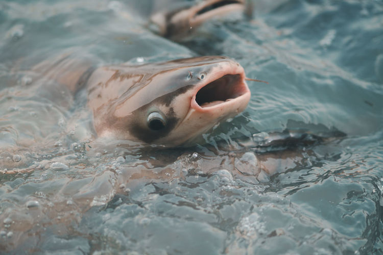 Animal Water Swimming Vertebrate Animal Themes One Animal Animals In The Wild Fish Animal Wildlife Sea Mouth Mouth Open Animal Body Part Close-up Underwater No People Waterfront Selective Focus Sea Life Animal Mouth Marine Animal Head  Outdoors Animal Eye