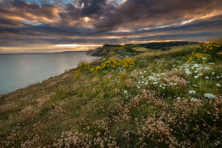 Scenic view of field by sea against cloudy sky during sunset
