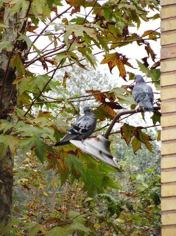 Bird Photography Bird Tree Animal Green Color Nature Iran♥ Irantravel Jangel No People Lamp Wall Naturephotography Sky ایران کبوتر درخت درختان برگ طبیعت