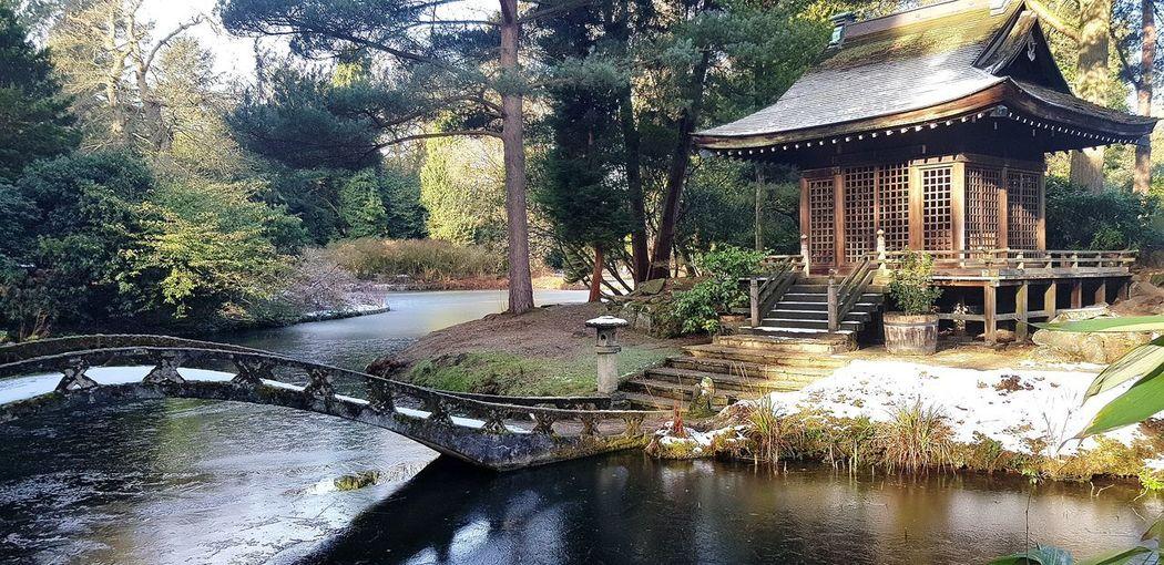 Pagoda Building Bridge Ice Frozen Water Scenics Water Tree Architecture