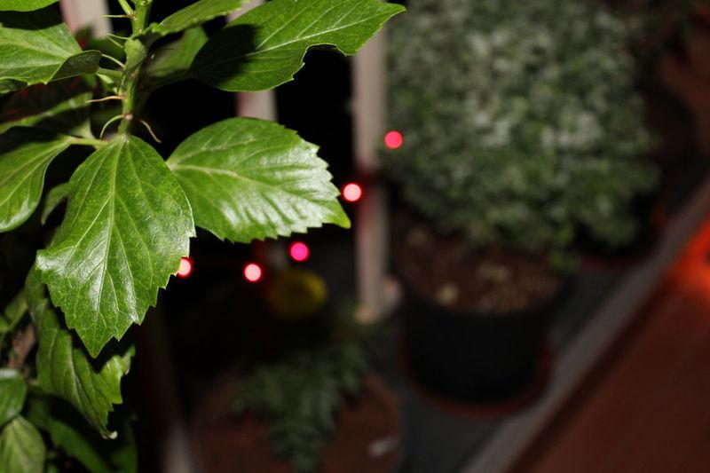 Clarity Diwali2k15 Leaf Randompicture