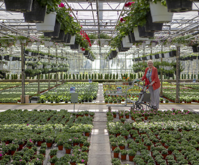 Rear view of people in greenhouse
