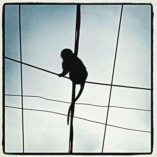 Animal Lines Monkey