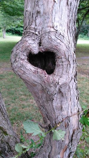 Saw this tree.. Heart Shape Check This Out Makes Me Happy Our World Thru My Eyes Very Inspired By My Muse Onlygodcouldcreatethis Heartshape Heart In Nature TreePorn Treescollection Treelovers Heart Shapes In Nature Sawonmyadventure