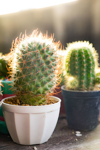 Many cactus pots are set on wooden boards. Cactus Succulent Plant Thorn Spiked Potted Plant Sharp No People Growth Close-up Plant Green Color Barrel Cactus Nature Warning Sign Focus On Foreground Communication Flower Pot Beauty In Nature Sign Outdoors