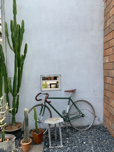 Potted Plant Plant No People Wall - Building Feature Day Growth Nature Architecture Bicycle Built Structure Outdoors Container Green Color Leaf Land Vehicle Plant Part Wall Beauty In Nature Building Exterior Succulent Plant Wheel