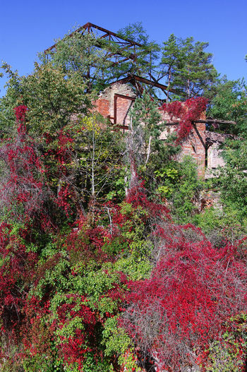 autmn Autumn Beelitz Heilstätten Golden Green Color Red Ruins Sunlight Beauty In Nature Blue Blue Sky Day Daylight Germany Growth History Leaf Leaves Low Angle View Nature No People Outdoors Photography Plant Sky Tree