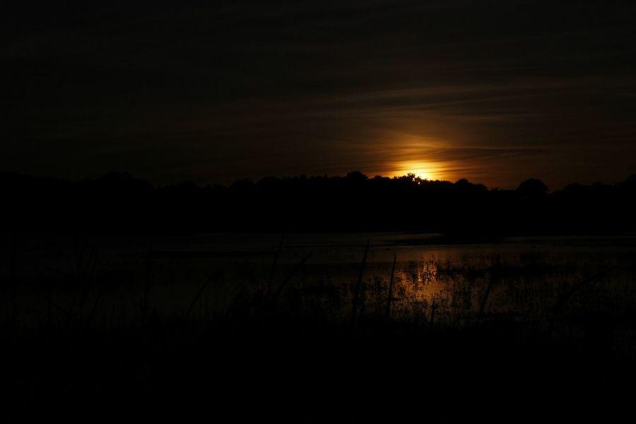 Balade de nuit à Cantizac (Séné - Morbihan, France) Balade Morbihan Nature Nuit SenecaLake