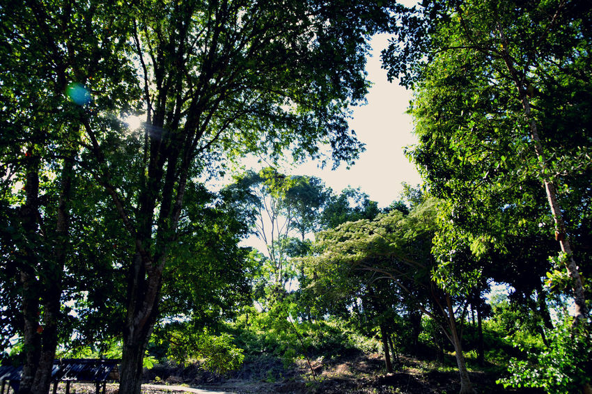 EyeEmNewHere Beauty In Nature Branch Day Green Growth Nature No People Outdoors Scenics Tranquility Tree