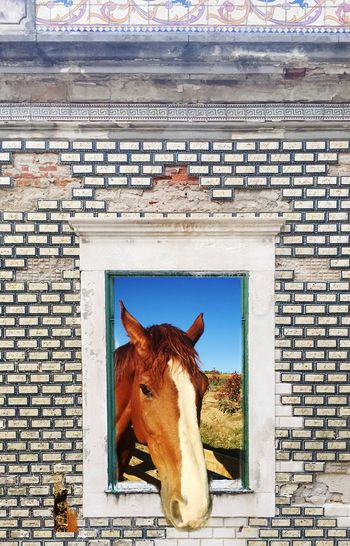 Digital composite image of horse seen through old window
