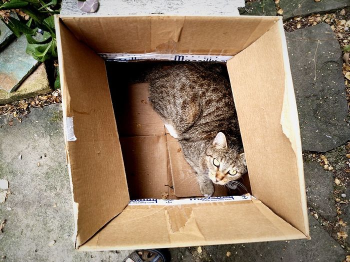 Directly above shot of cat sitting in cardboard box