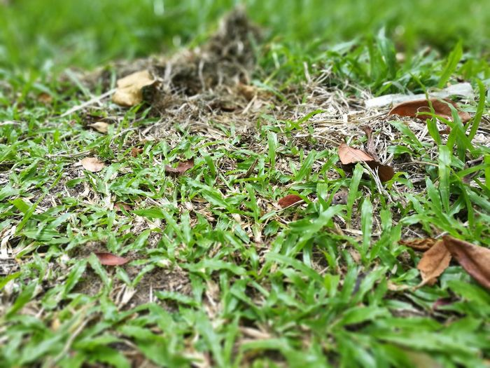 Grass Nature Field Green Color Day Growth Outdoors No People Close-up Plant Beauty In Nature Fungus