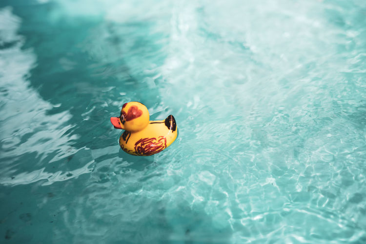 High angle view of duck toy floating in swimming pool
