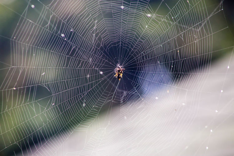 Close-up of spider and web against blurred background
