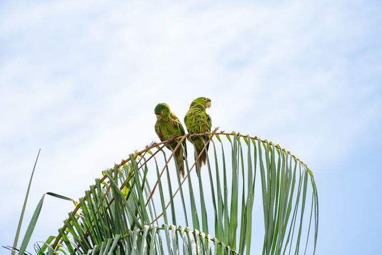 Low angle view of parrots perching on tree against sky