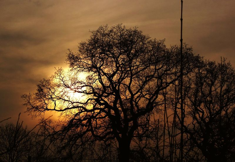 Sunset Tree Sky Nature Beauty In Nature Growth Dramatic Sky Silhouette Branch No People Outdoors Cloud - Sky Sun Bare Tree Day