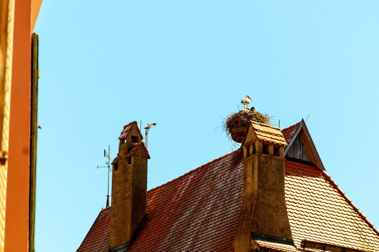 Low angle view of bird perching on roof of building