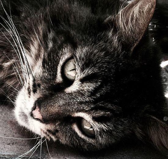 Cat The Street Photographer - 2016 EyeEm Awards Closeup Tabi Redondo Beach Family Cat