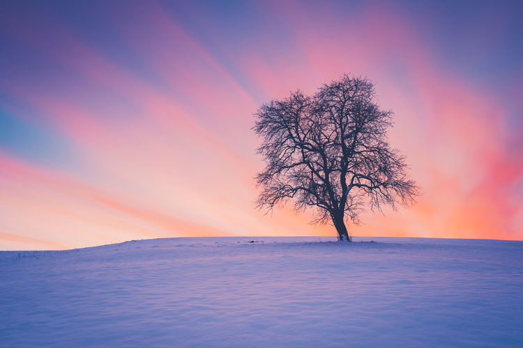 Winter sunset with lonely tree Slovenia Bare Tree Beauty In Nature Cold Cold Temperature Colorful Dusk Environment Isolated Landscape Nature No People Non-urban Scene Orange Color Outdoors Plant Scenics - Nature Sky Snow Sunset Tranquil Scene Tranquility Tree Winter