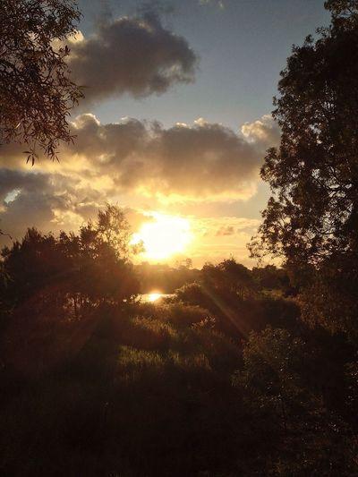 Sunset IPhone Sunbeam Sandgate