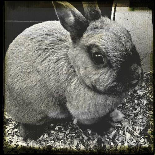 My crazy rabbit : D
