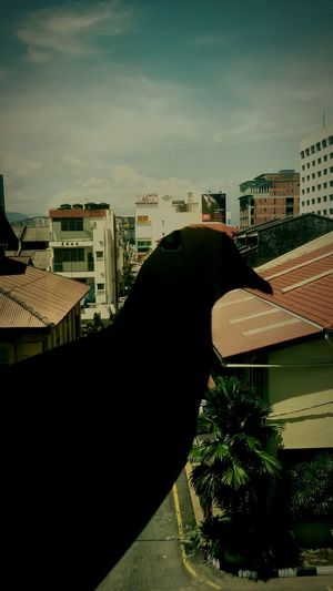 Bird On The Window Black Birds Time Is Running Out Hotel View Enjoying The Moment EyeEm Gallery Live To The Fullest Hanging Out Relaxing Enjoying The View Malaysia Ipohtown Backstreets