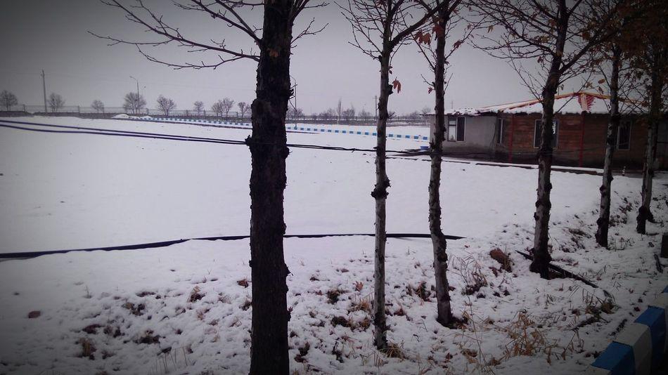 Just now Winter University Beautiful Iran Best  Nice Qazvīn Iran Shot Best Shot Best Winter Natural Nature