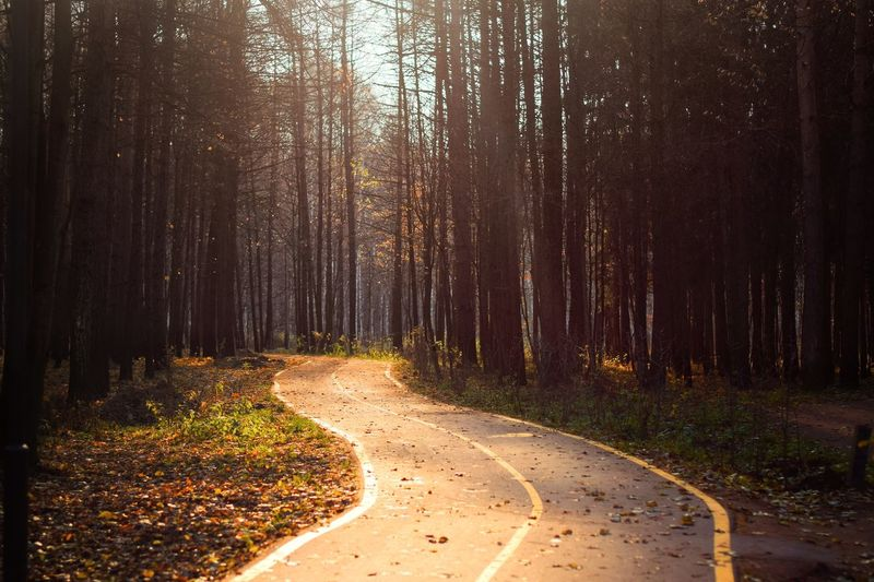 Tree Forest Land Plant Nature The Way Forward Tranquility Environment Growth WoodLand Scenics - Nature Sunlight Beauty In Nature Footpath Road Tranquil Scene Tree Trunk Direction No People Trunk