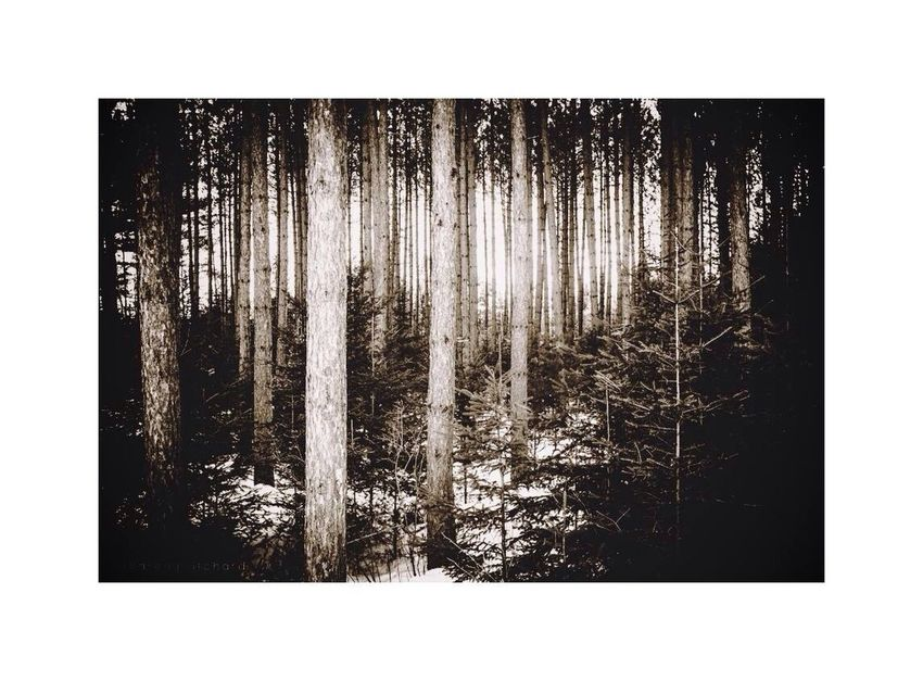 """""""The clearest way into the Universe is through a forest wilderness."""" Black & White EyeEm Best Shots Connected With Nature The Explorer - 2014 EyeEm Awards"""